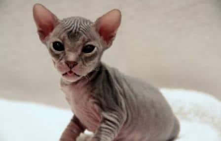 chattes sans poils lesbiennes capuche