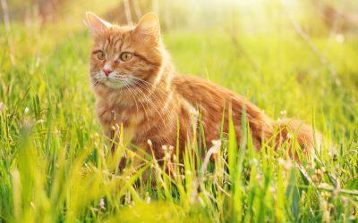 Tommy, un chat sauve son maître en appuyant sur la touche d' urgence du téléphone!