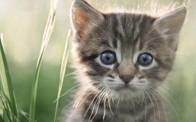 Vermifuge du chaton, quand et comment vermifuger votre chaton ?