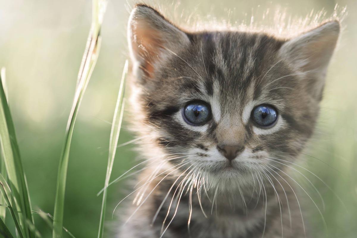 vermifuge chaton