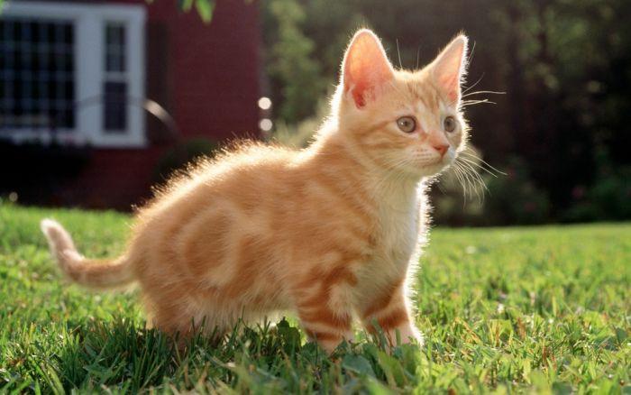 Répulsif naturel pour le chat, plusieurs possibilités existent?