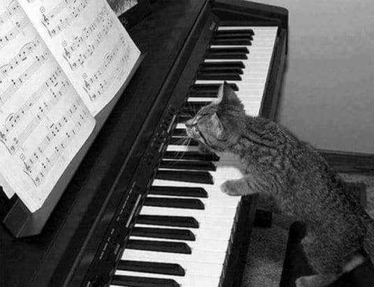 chat-joue-piano