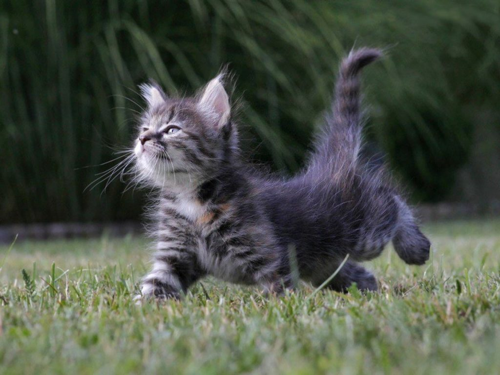 chaton-etire