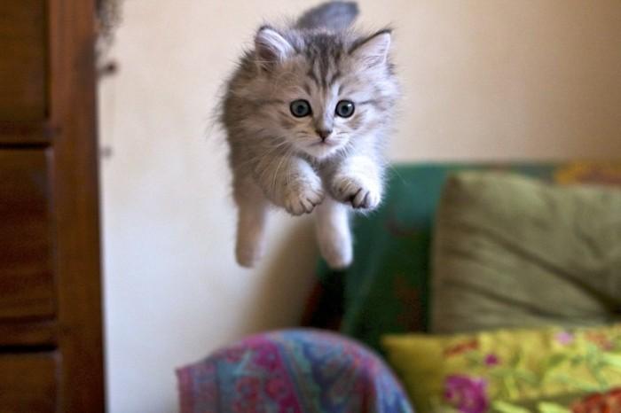 Palmar s des 20 chatons les plus mignons qu en pensez - Image des mignon ...