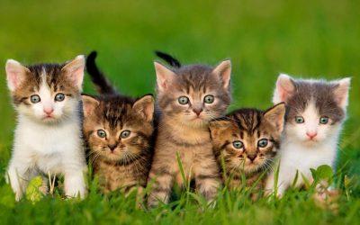 palmarès des 20 chatons les plus mignons, qu'en pensez vous?