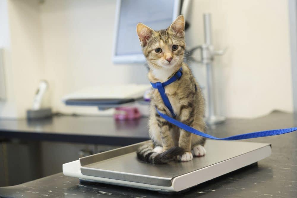 Votre chat est'il anorexique ?