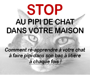guide chat pipi partout