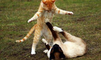 Le sida du chat, une maladie qui fait peur!