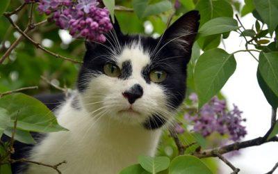 Savez vous que certaines plantes sont toxiques pour votre chat ?