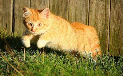 Voici l'histoire extraordinaire d'un chat et de son maître enterrés vivants !