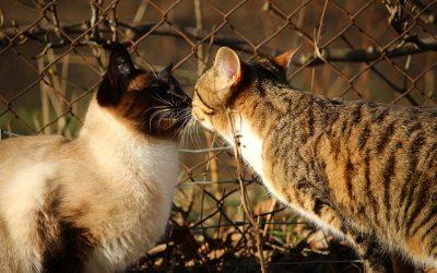 Vacciner mon chat ou mon chaton, pourquoi ?