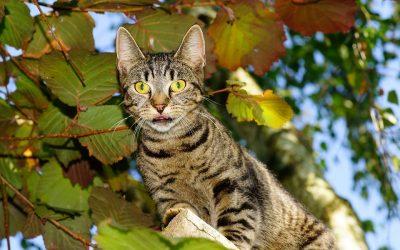 Adoption chat, urgence! ils vous attendent dans un refuge!