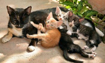 Mon chat éternue!! Le coryza du chat,une maladie très contagieuse !!!