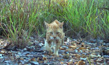 Voici l'histoire vraie et incroyable du chat karim !