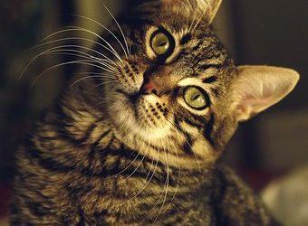 Histoire surprenante du chat à la patte de bois