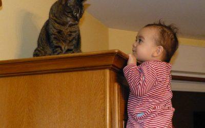 Bébé arrive, comment va se passer la cohabitation avec mon chat!