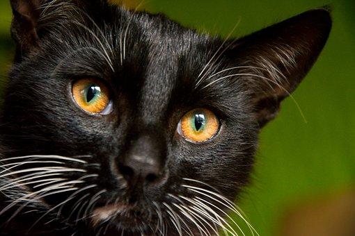les dangers de la vie courante pour votre chat!