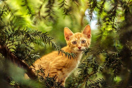 Nos chats, ces acrobates!