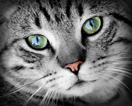 Jack, ce petit chat né sans yeux!