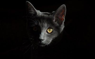 Les chats et la guerre!