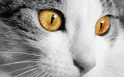 Les  différents répulsifs pour chats