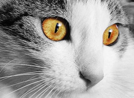 Gracie, un autre chat extraordinaire!