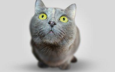 Rééduquer son chat en douceur
