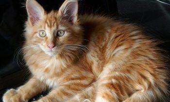Pourquoi ne pas offrir une alimentation saine et bio à notre chat!