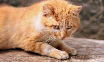 Mon chat vomit ses croquettes!
