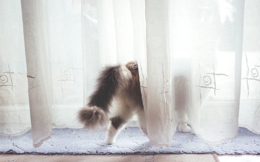 Comment choisir sa litière pour chat ?