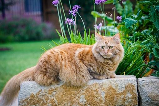grandes photos de la chatte Ebony fille chatte pics