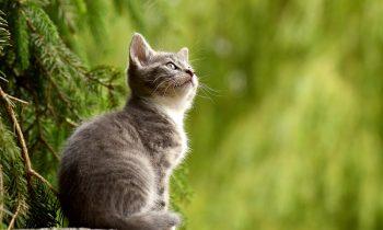 Votre chat peut être protégé grâce à une mutuelle