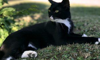 Apres huit ans de disparition, Moon, une petite chatte retrouve sa famille!