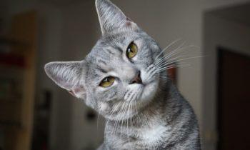 Comment aider un chat maltraité ?