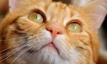 Le don total du chat Stitch: il sauve son maître mais perd la vie!