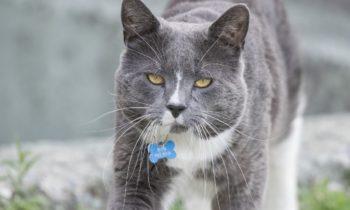 Un cadeau pour votre chat: La chatière!