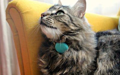 Gps pour chat : Découvrez ses avantages