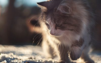 Comment promener son chat en laisse ?