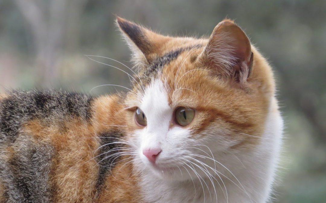 Quels sont les bienfaits d'une alimentation humide pour le bien-être de votre chat ?