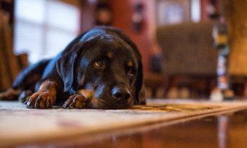 Bien choisir une gamelle anti gloutons pour les chiens gourmands