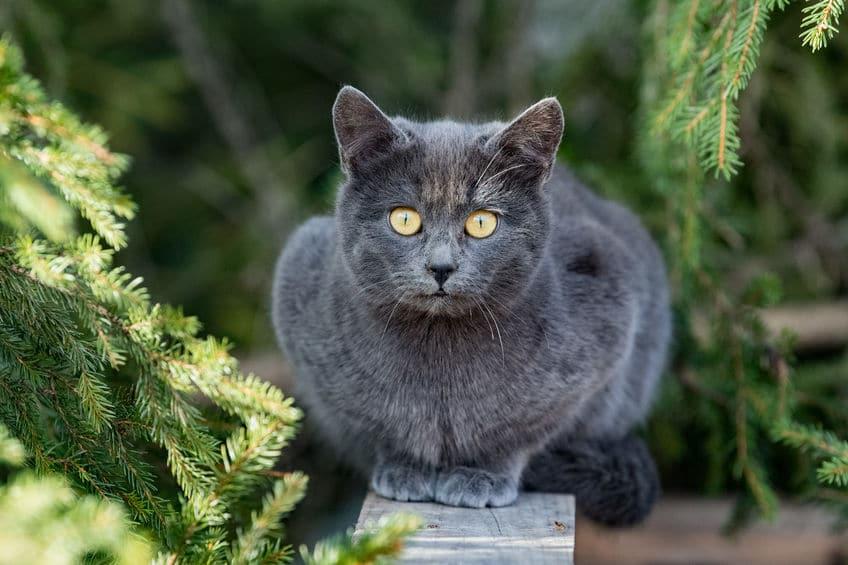 Quelles sont les méthodes pour retrouver un chat perdu dans la nature?