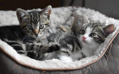 Comment prendre soin de vos animaux domestiques?