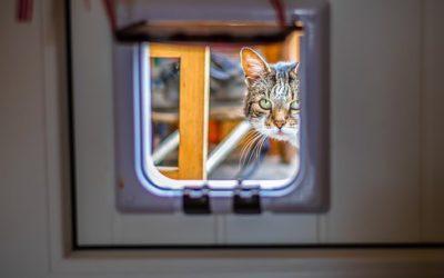 Quel est le plus beau cadeau que vous pourriez faire à votre chat?