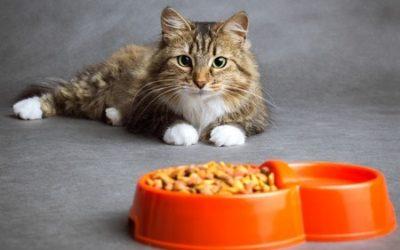Comment choisir ses croquettes pour chats?