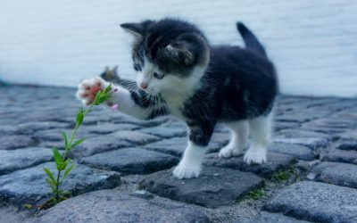 Assurance chat pour assurer sa santé et son bien-être au quotidien