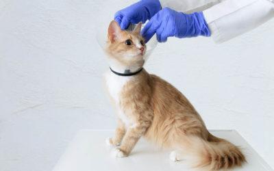 Quand et comment doit-on stériliser son animal ?