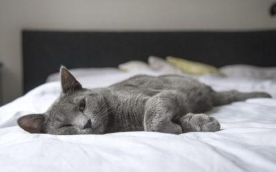 Calculs urinaires chez le chat : comment l'aider ?