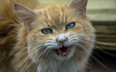 Dans quels cas le chat est-il agressif et comment le calmer ?
