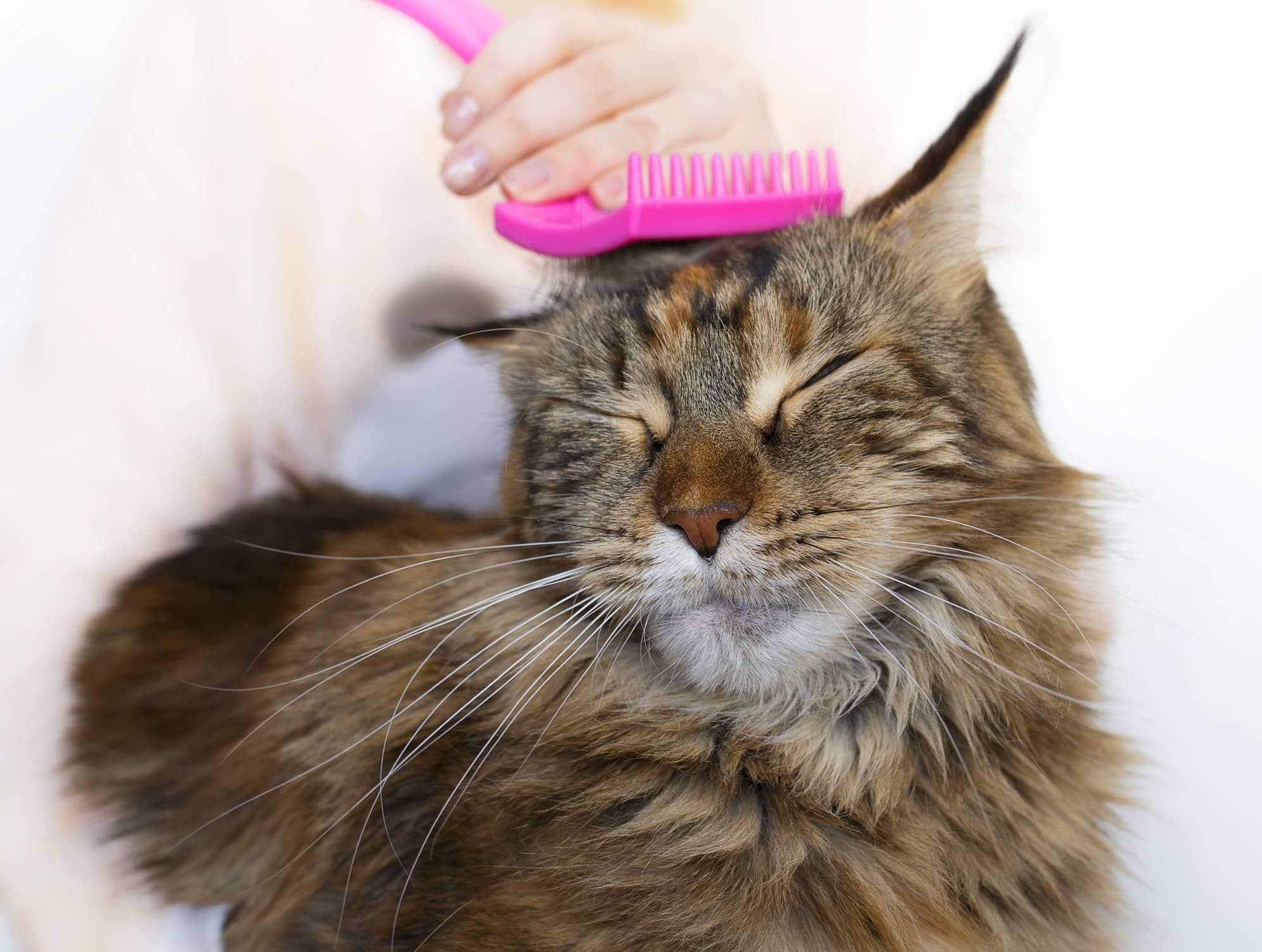 trouver un toiletteur pour chat professionnel