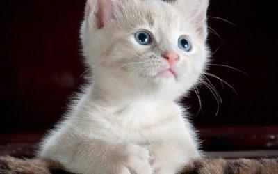 Quel Prénom pour votre chatte ? 30 prénoms de chat femelle
